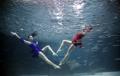 Spectacle sous-marin avec des sardines