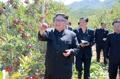 Kim Jong-un dans un verger