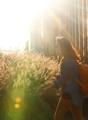 Autumn sun on way to work