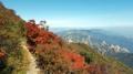 El monte teñido de otoño