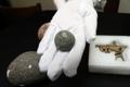朝鮮水軍の石弾発見