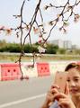 秋に咲いた桜