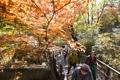 Sous les feuilles d'automne