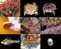 独島で58種の生物初発見