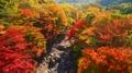 済州島・漢拏山の紅葉が見頃
