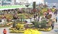 Festival de chrysanthèmes