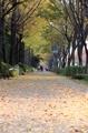Se aleja el otoño