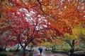 雨のキャンパス彩る紅葉