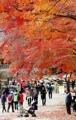 El otoño en su resplandor