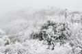 Pays de neige