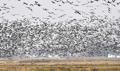 世界的な渡り鳥飛来地