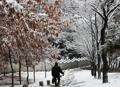 Paseo entre la nieve