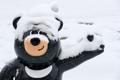 El oso negro Bandabi en blanco