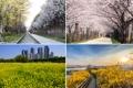 ソウル市「春の花が美しい通り」発表