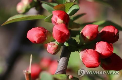 낮 동안 기온 '쑥'…서울·경기·울산은 미세먼지 '나쁨'