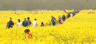 (ما وراء الخبر)سياح محليون في جزيرة جيجو يملأون فراغ السياح الصينيين