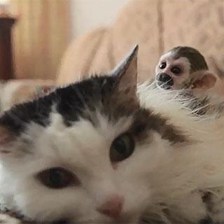[현장영상] 아기 원숭이 돌보는 고양이 화제