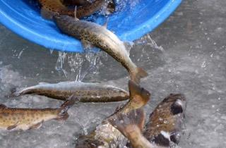 '손맛 제대로'…화천산천어축제 산천어 추가 투입