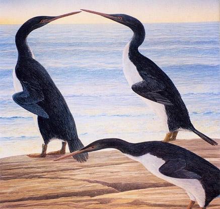 공룡시대를 누볐던 자이언트 펭귄