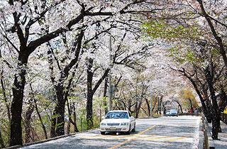 서울시가 선정한 '아름다운 서울 꽃길 170선'