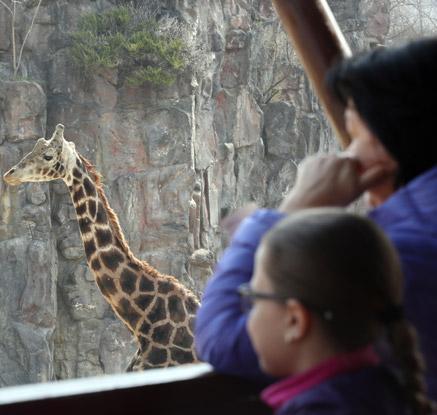 서울대공원 동물원 재개장