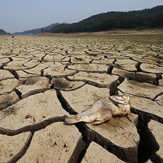[포토무비] '최악의 가뭄에 이른 폭염까지'…신음하는 한반도