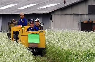 인형극·뗏목·들꽃·석탄…정선 오감만족 여름축제