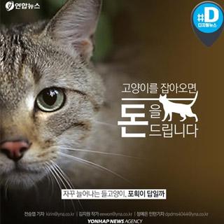 [카드뉴스] '들고양이 잡아오면 돈 준다'…옳은걸까