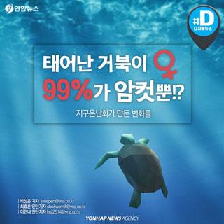 [카드뉴스] 아기 거북이 99%가 암컷…그 이유는