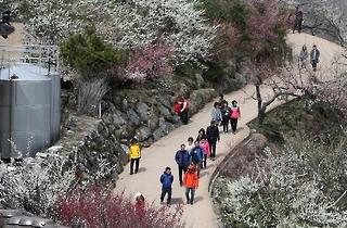 '봄꽃 축제의 서막'…광양 매화축제 3월 17일 개막