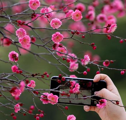 '봄의 향기'