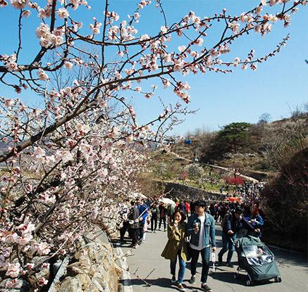 봄꽃축제 활짝