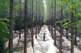 울산대공원 새 명소 메타세쿼이아 길 조성