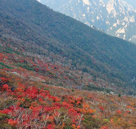 화려한 설악산 단풍…깊어가는 가을