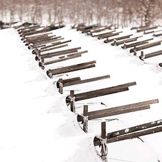 [카드뉴스] 눈 내린 인삼밭…아름다움의 '역설'