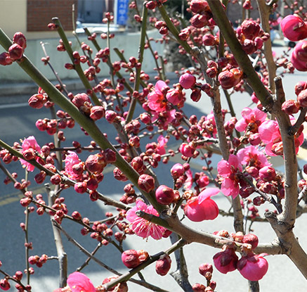 꽃망울 '톡톡', 봄마중 나서볼까