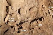 정선서 3천년 전 동굴무덤 발견