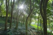 [주말N여행]더위야 가라…세계최대 활엽수 자생지 완도수목원