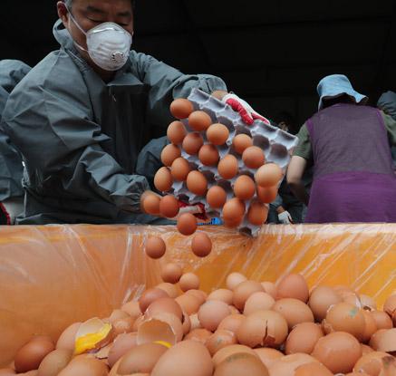 """정부 """"살충제 계란 사용 가공식품도 전량·수거 폐기""""…파문 확산되나"""