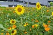 [카메라뉴스] 쓰레기 공터가 꽃밭으로 깜짝 변신