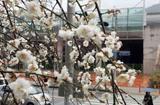 [주말 N 여행] 수도권: 경춘숲길 등 봄꽃 아지랑이 사르르