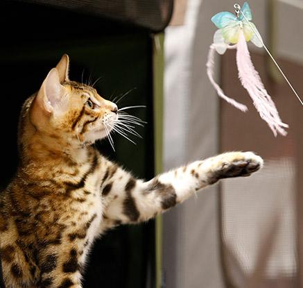 '전 세계 애묘인들 모여라냐옹~' 태국 국제 고양이 쇼