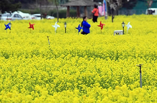 꽃놀이·라이딩·마라톤…삼척 봄맞이 행사 풍성