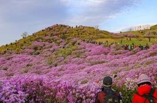 '진분홍 봄 정취 즐겨요' 황매산철쭉제 4월 28일 열려