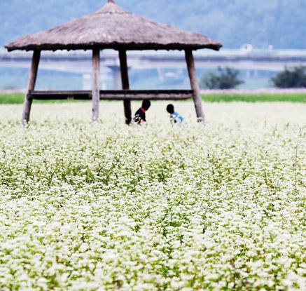 메밀꽃 바라보며 휴식