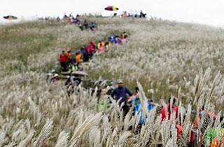 정선 민둥산 억새꽃 축제 개막…은빛 가을 힐링 여행