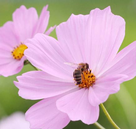 추석에도 바쁜 꿀벌