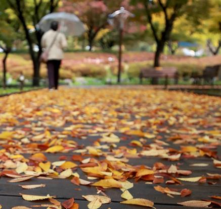 시간은 가을로