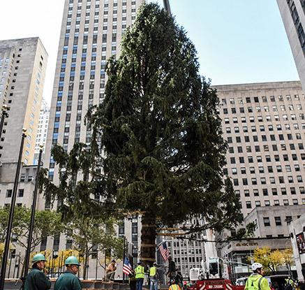 """뉴욕 록펠러센터도 크리스마스 준비 한창…""""거대 트리 옮기자!"""""""