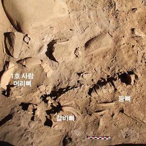 정선 매둔동굴에서 나온 청동기시대 사람 뼈